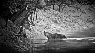 wildlife photography holidays