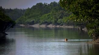 wildlife photography in india