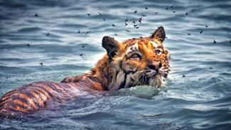 sundarban wildlife expeditions