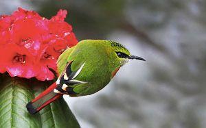 Singalila National Park Birdlife photography